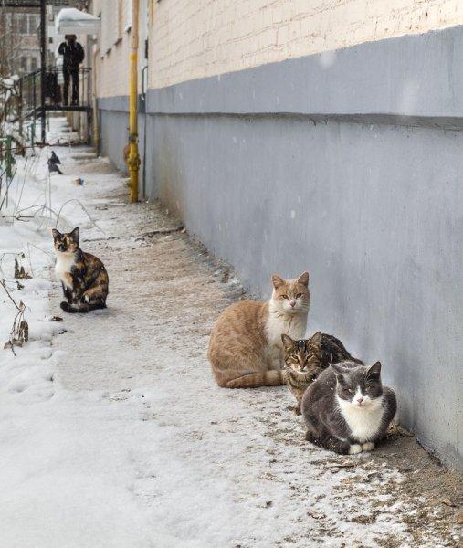 Котики, птички и человеки