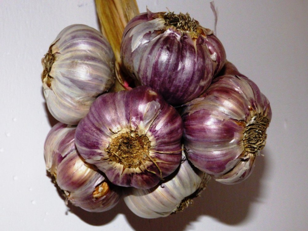 garlic_kitchen_spice_a_vegetable_g_wkowaty_garlic_g_wkowaty_plant_food-998096.jpg!d.jpg
