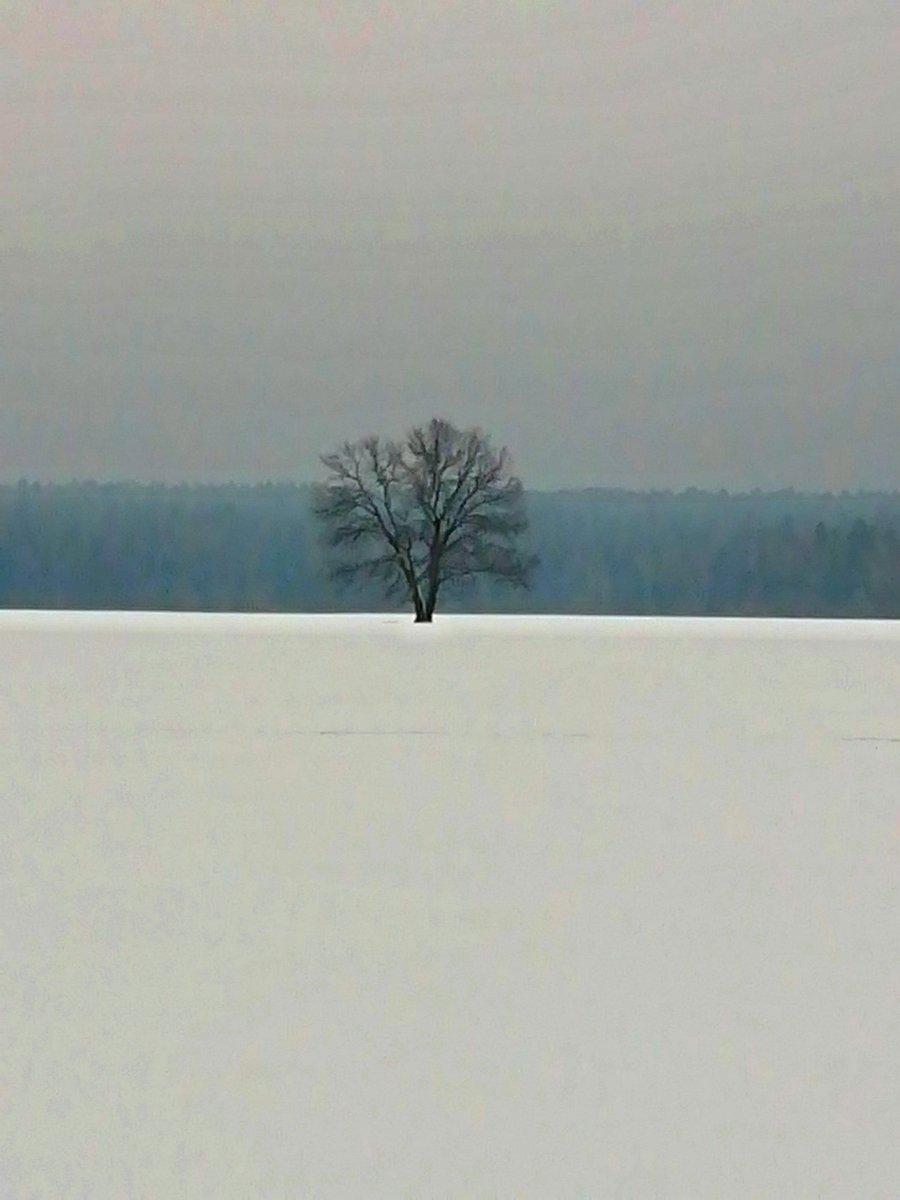 Деревня Артемово. Русское поле.