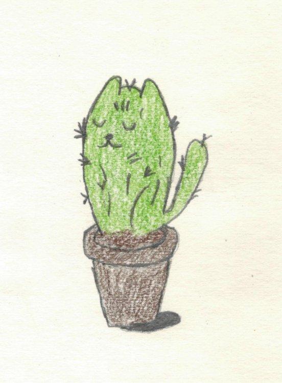 кактус.jpg