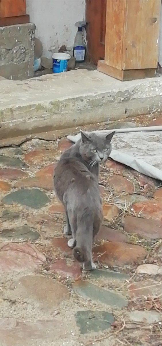 Монастырский кот. Переславль.