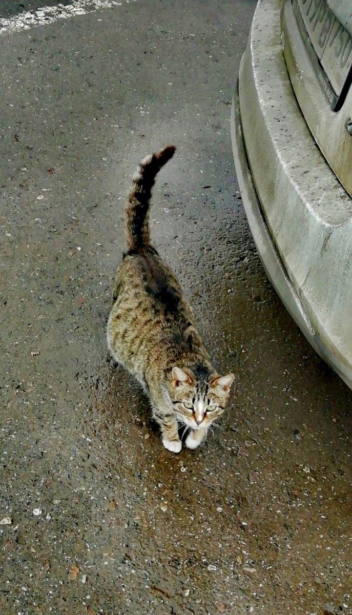 Котомама. Монастырские коты.