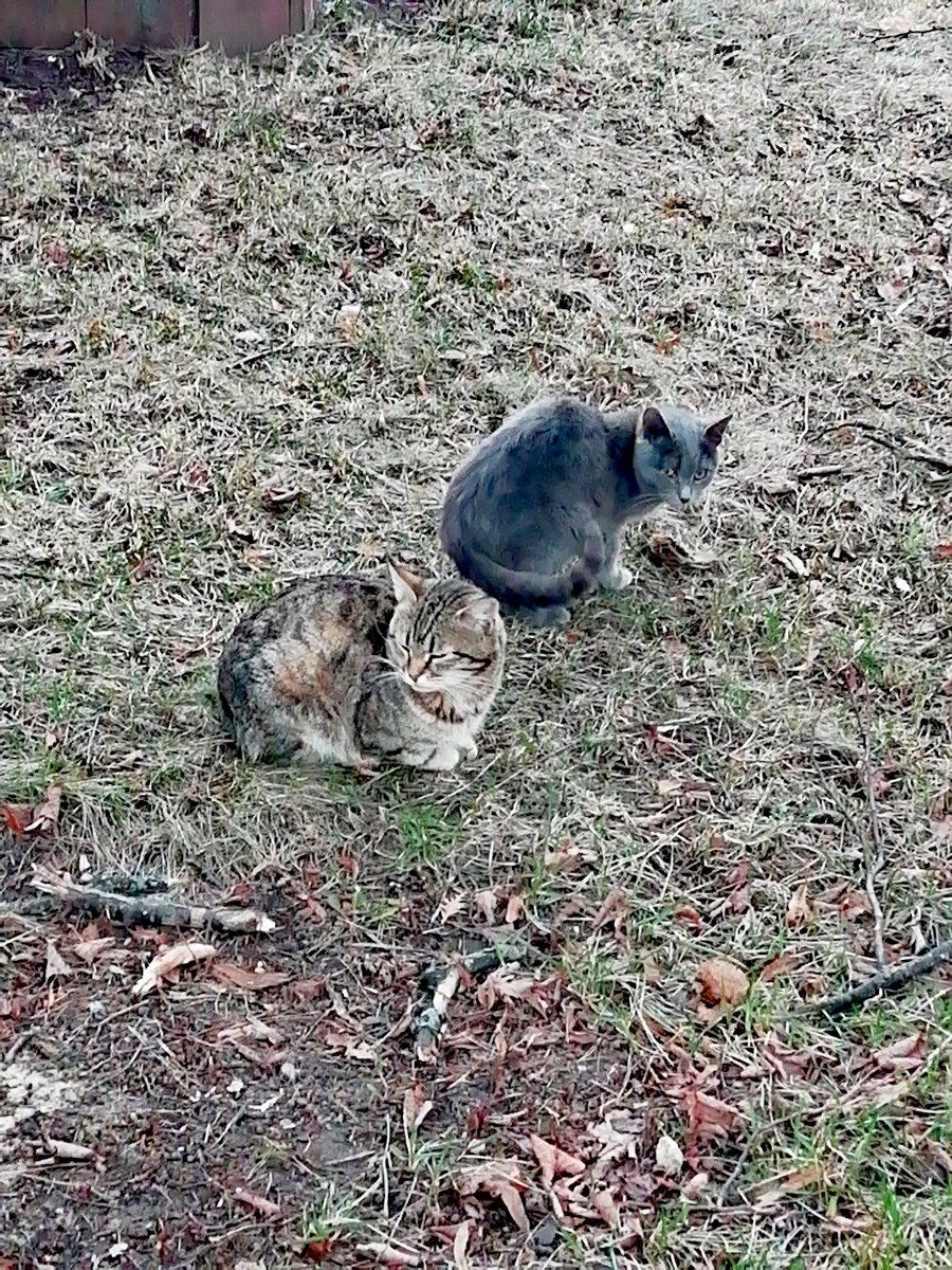 На совещании. Монастырские коты.