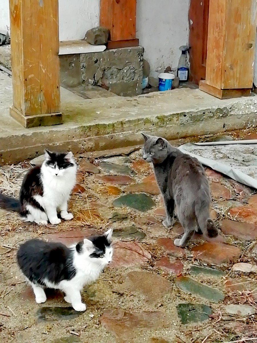 Монастырские коты. Переславль.