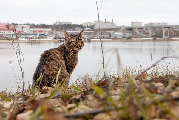 Волжский кот