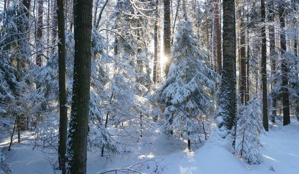Зима в правдинском лесу
