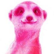 Розовый сурикат