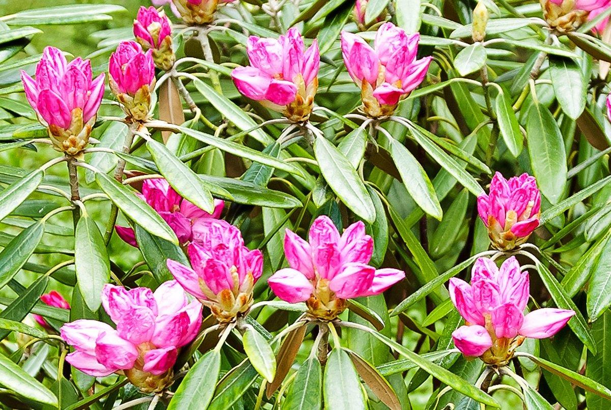 типо-цветочки-крупнея