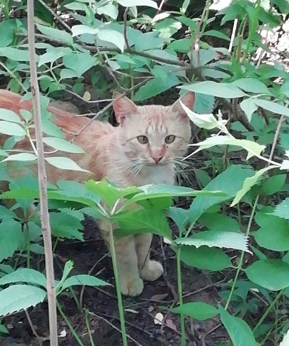 Кот Чубайс. Гроза Травинских котов.