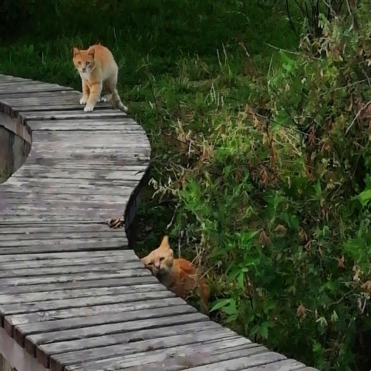 Люблю рыжих, наглых, дворовых котов.
