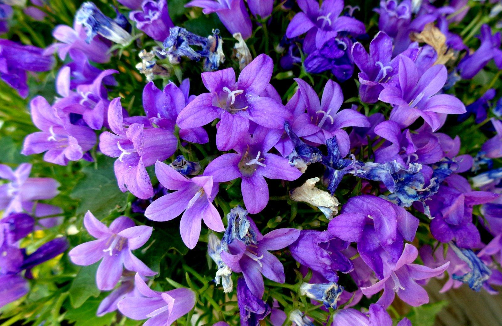 И снова фиолетовые цветочки