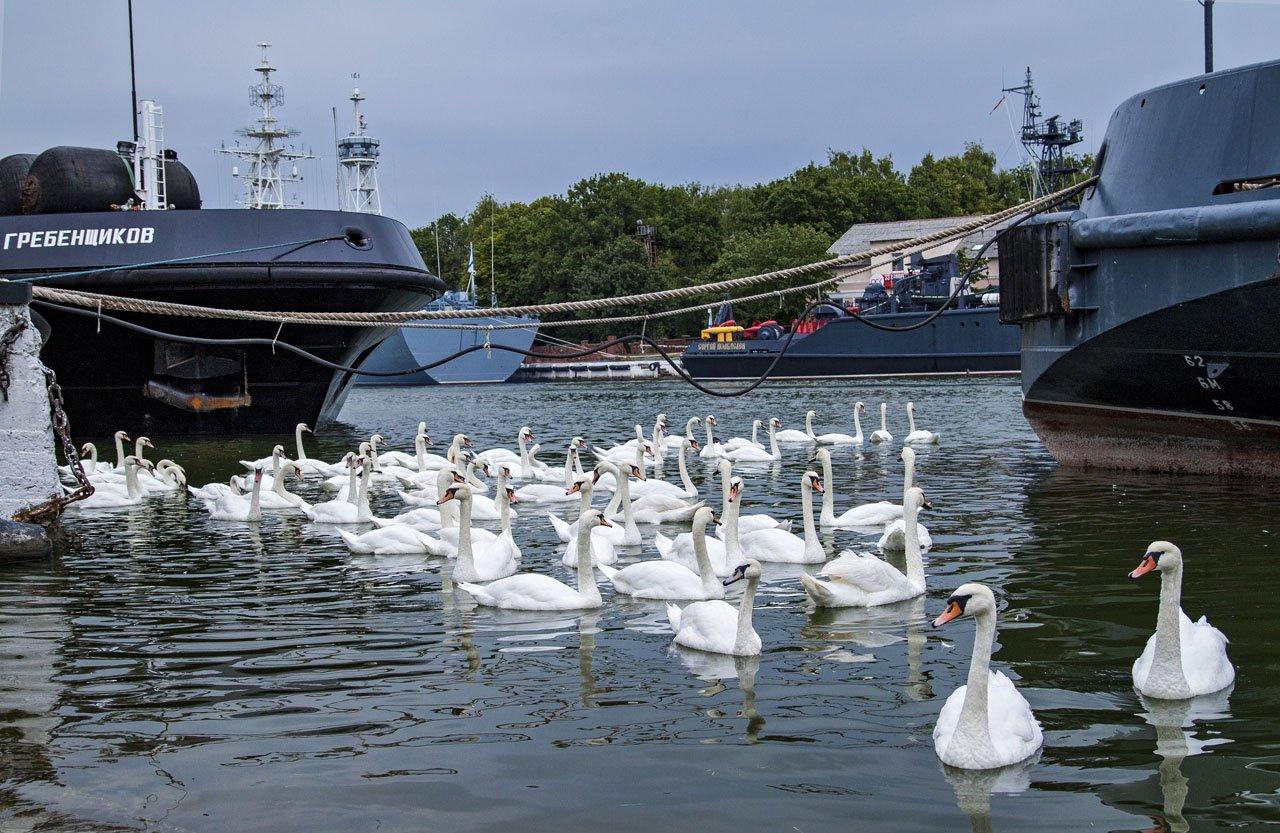 В нашу гавань заходили корабли...