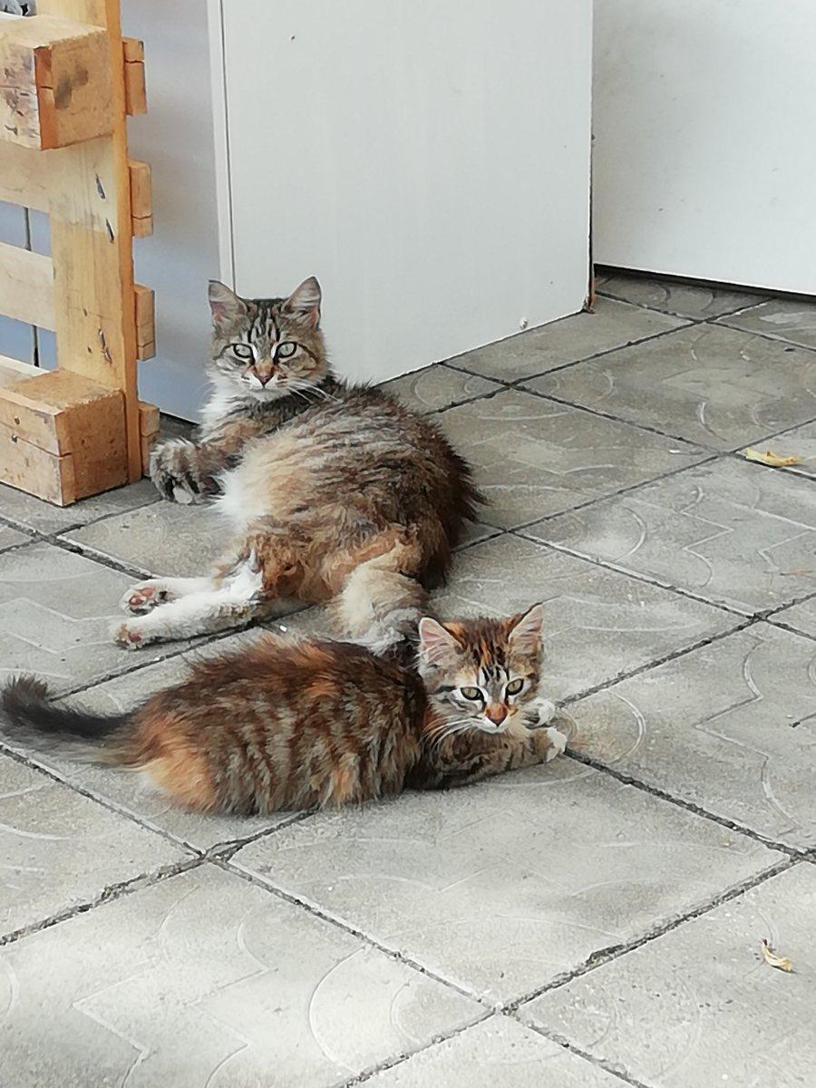 Уличные коты. Мама с дочей.