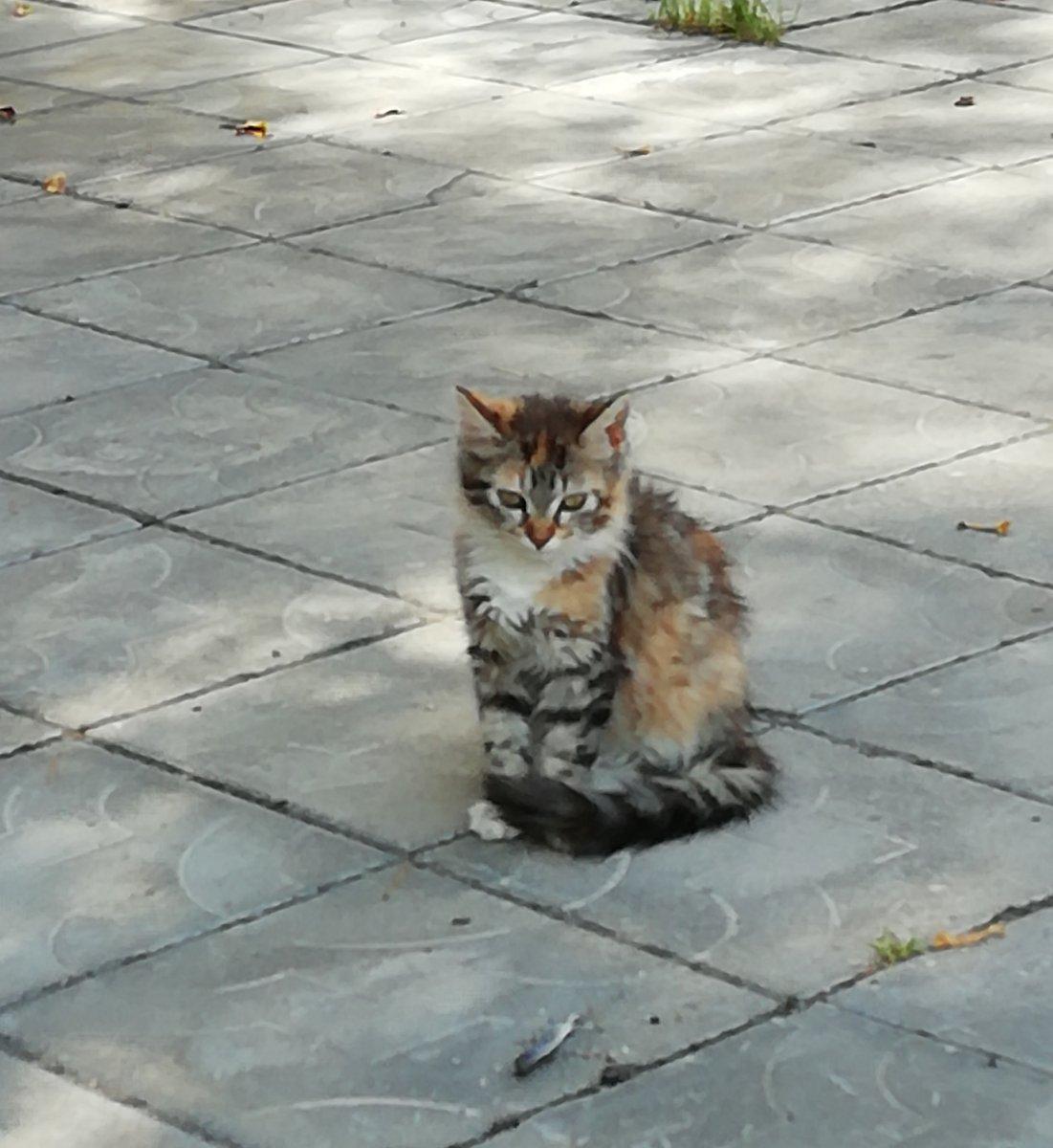 Уличные коты. Кнопочка.