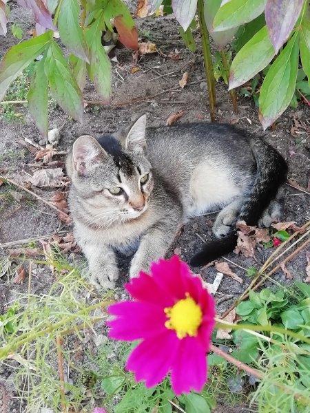 Уличный котик.