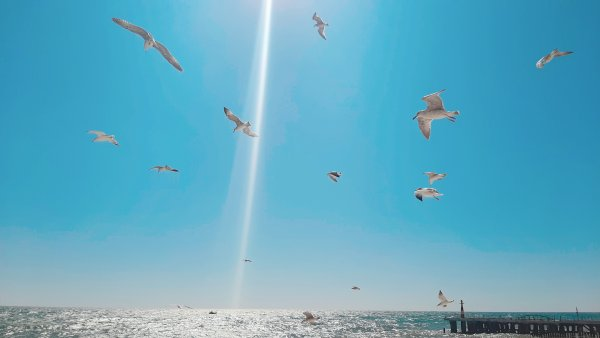 Летучие плавцы