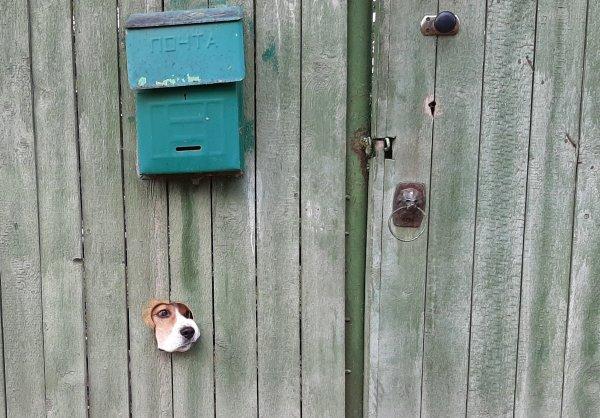 Кто там?