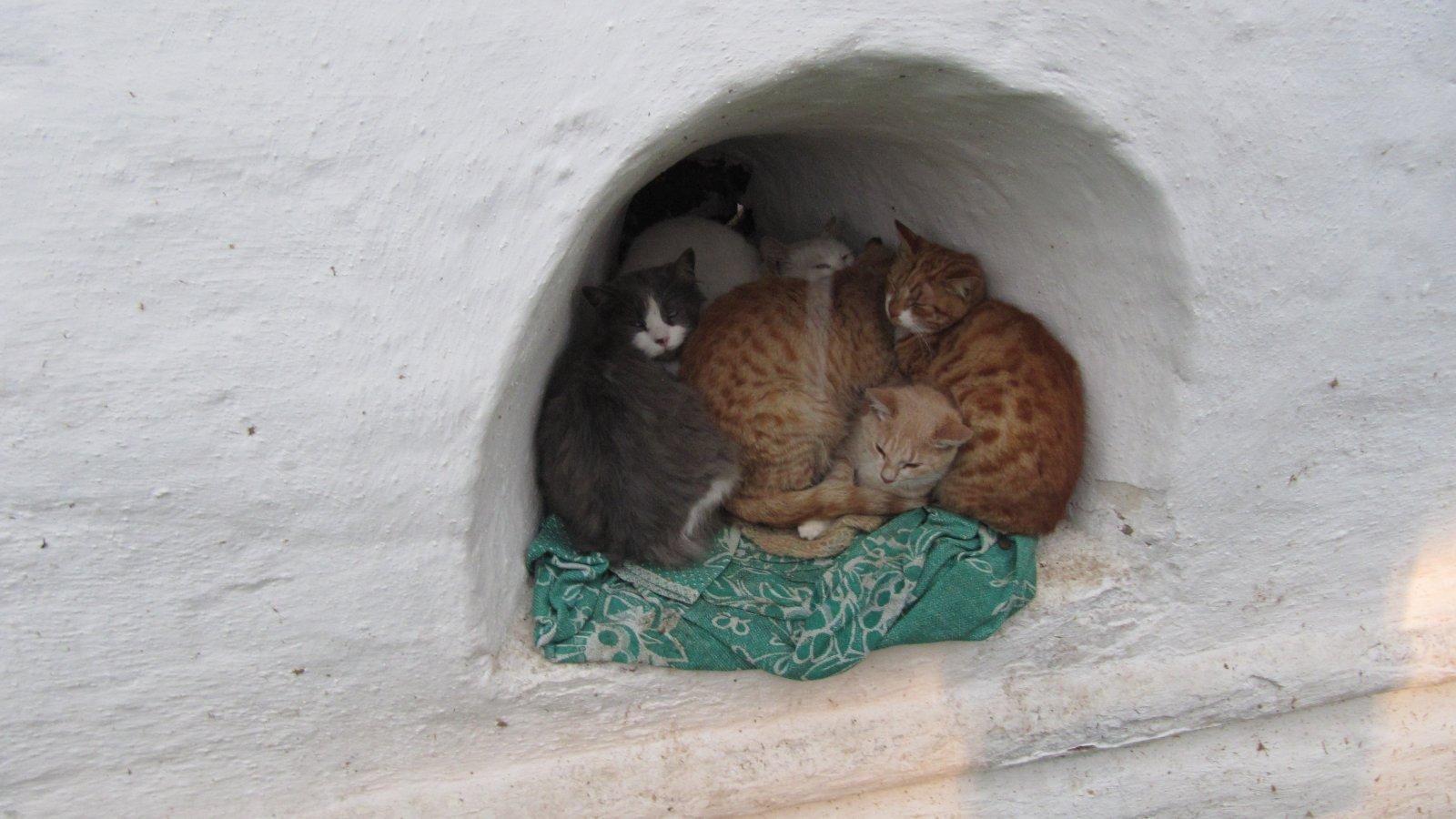 Монастырские коты.