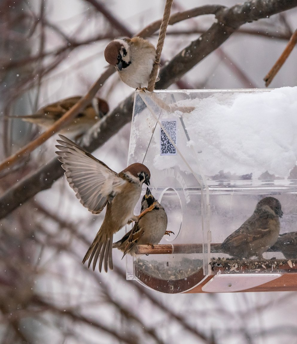 Разборки в птичьем квартале