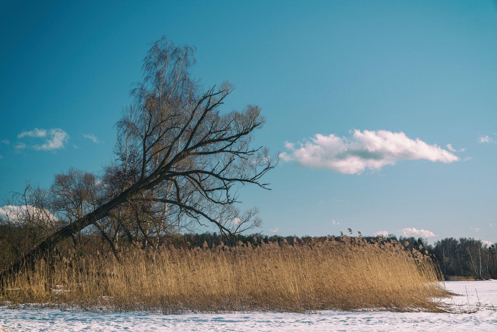 Зима на Пушкинском взморье (II)
