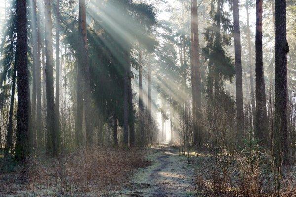Прогулка по весеннему лесу