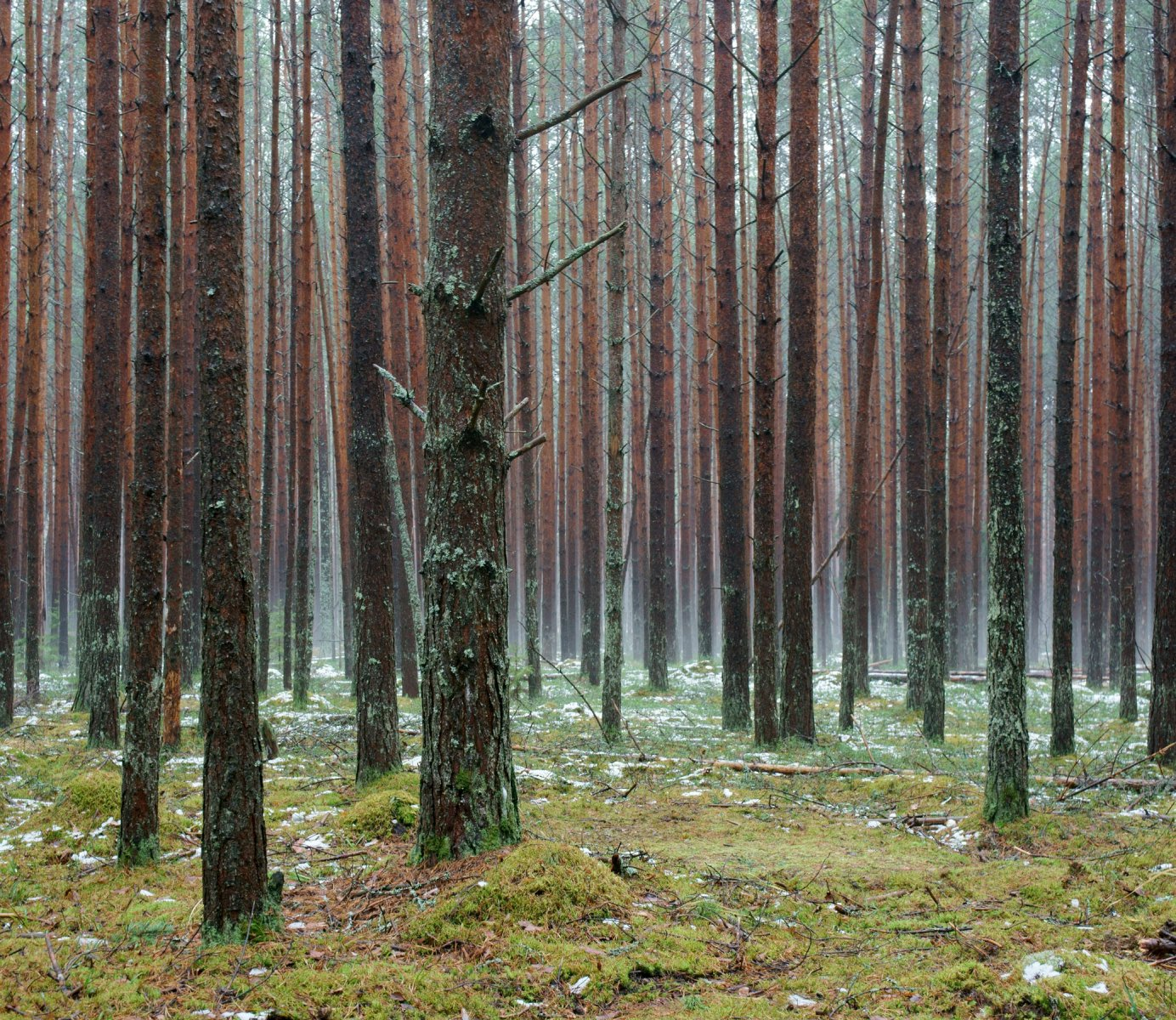 Талицкий лес