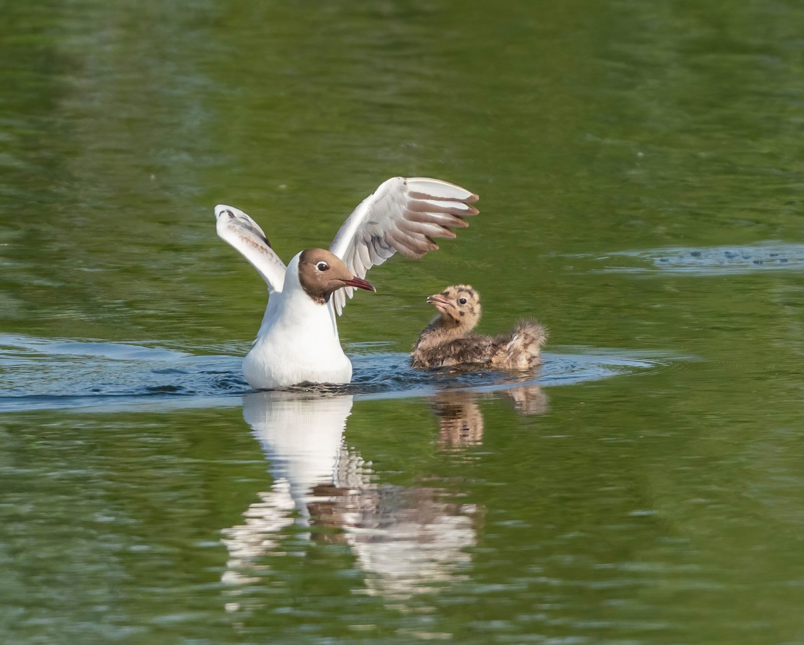 """""""Орлята"""" учатся летать"""