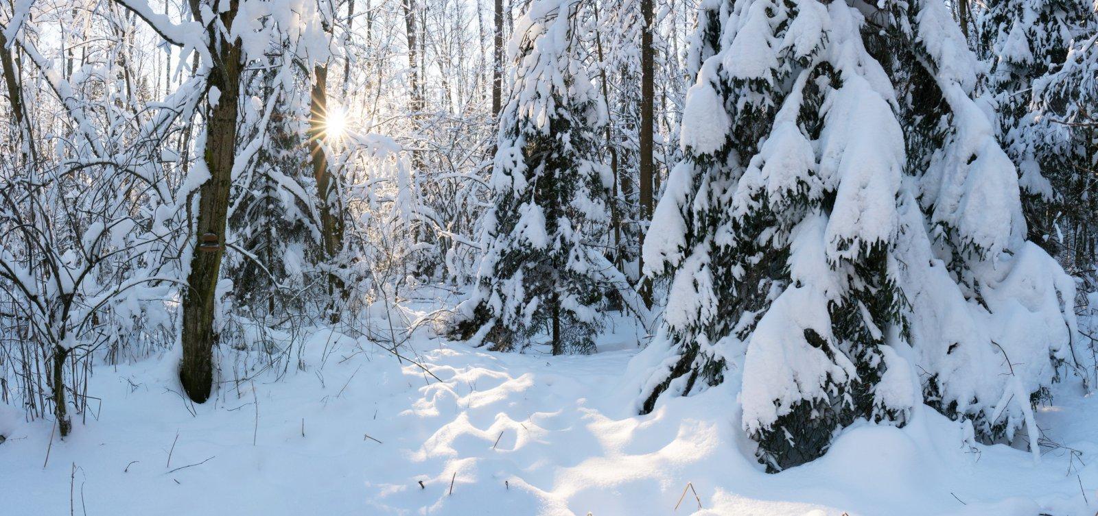Укрытые снегом