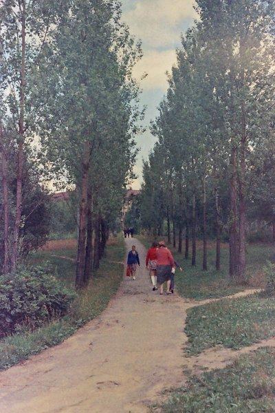 ВНИИЛМ.1975