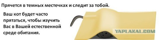 post-10-1226589603.jpg