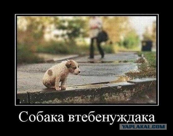 post-166-1303471253.jpg