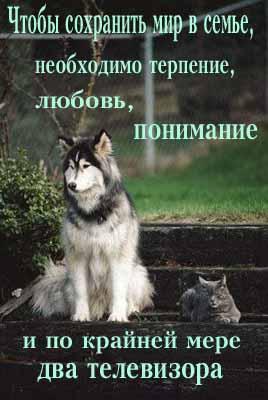 post-51-1223879536.jpg