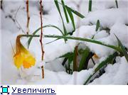 post-83-1244491791.jpg