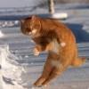 """Итоги конкурса """"Зимние забавы"""" - последнее сообщение от гыська"""