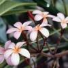 bloom80
