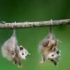 телефоны налоговой - последнее сообщение от opossum_opossumov